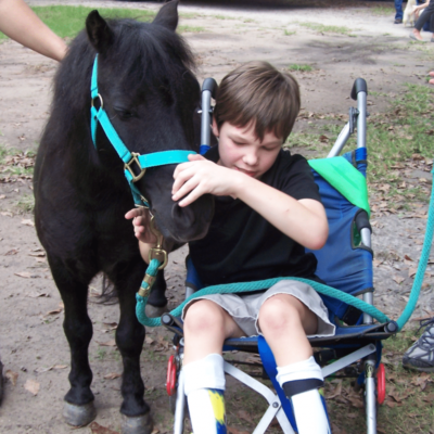 Young boy in stroller petting miniature horse at Fatih ETC